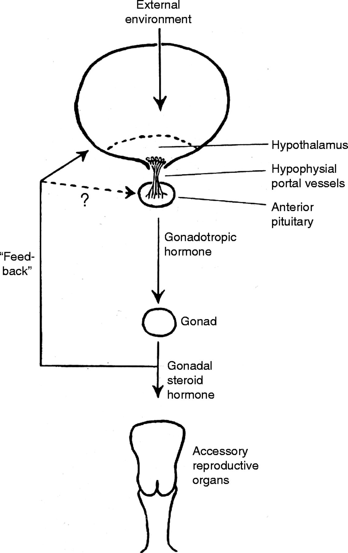 60 YEARS OF NEUROENDOCRINOLOGY: The hypothalamo-pituitary