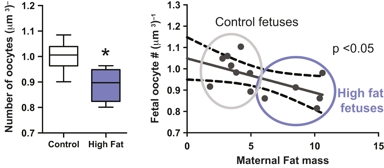 Nutritional adversity, sex and reproduction: 30 years of
