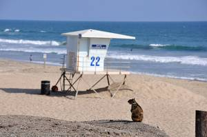 Beach Critter