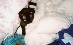 A young Merlin in bed