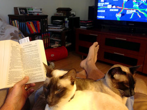 Reading is OK, but we still get the lap. (Siamese cats)