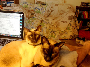 Writing; no we don't think so--not on our lap.