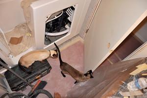Doorway / cat inspection