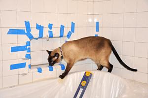 Tile work 5 / cat inspection
