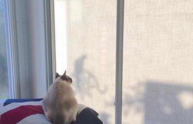 Sunroom Cats