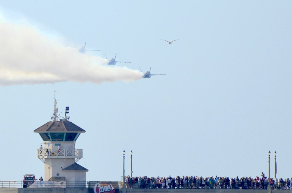 """""""Bye, guys,"""" said the gull."""