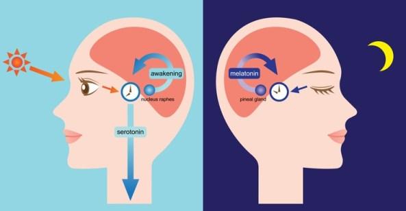 melatonin thumb.jpg