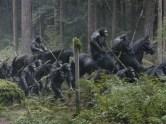 apes005