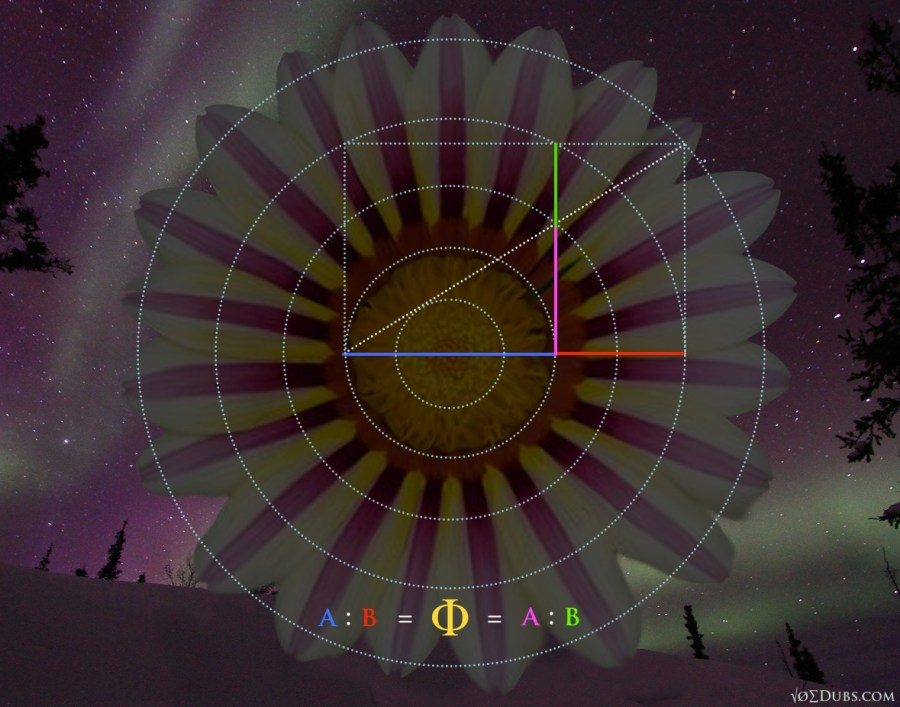 Phi Ratios Circle and Square3
