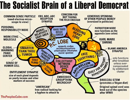 liberal democrat brain