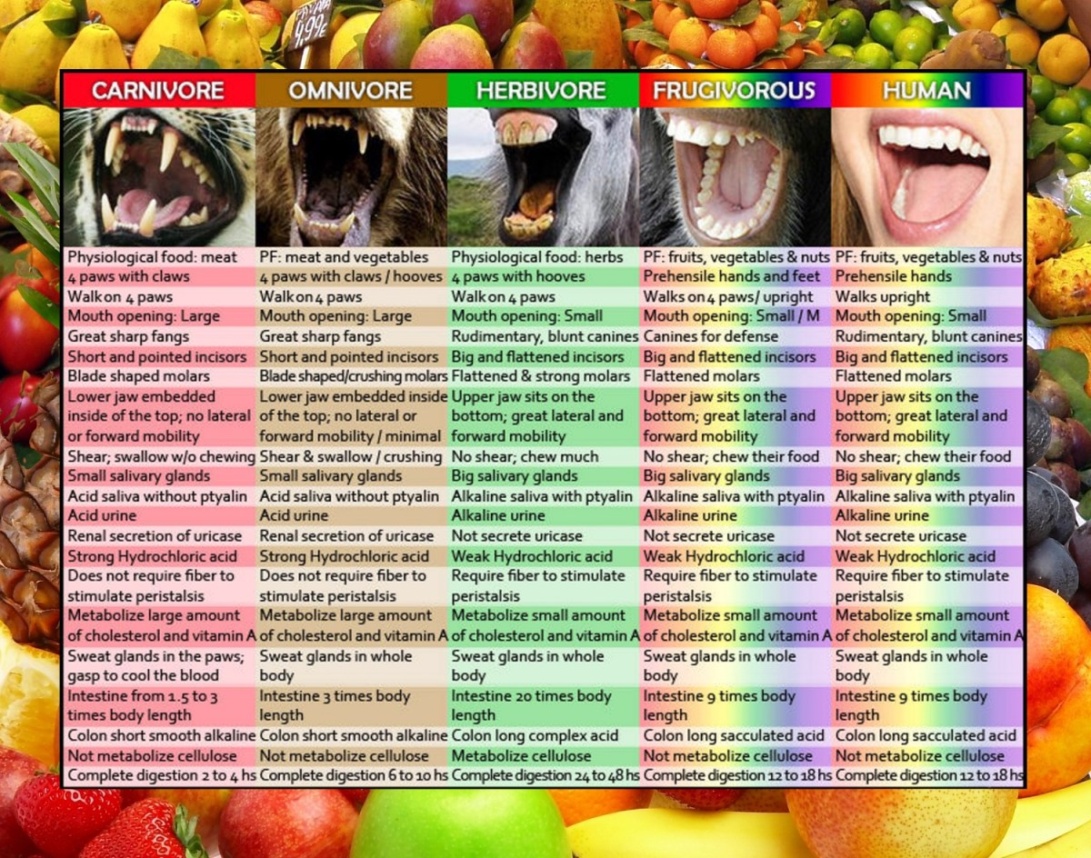 Are Humans Frugivores & Designed To Eat Mostly Fruit?