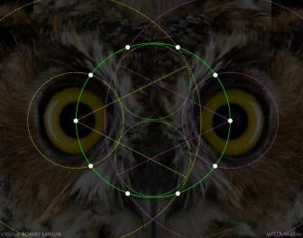 Pentagon Decagon Owl 1