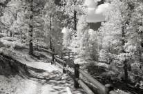 A Path Through the Infrared Woods