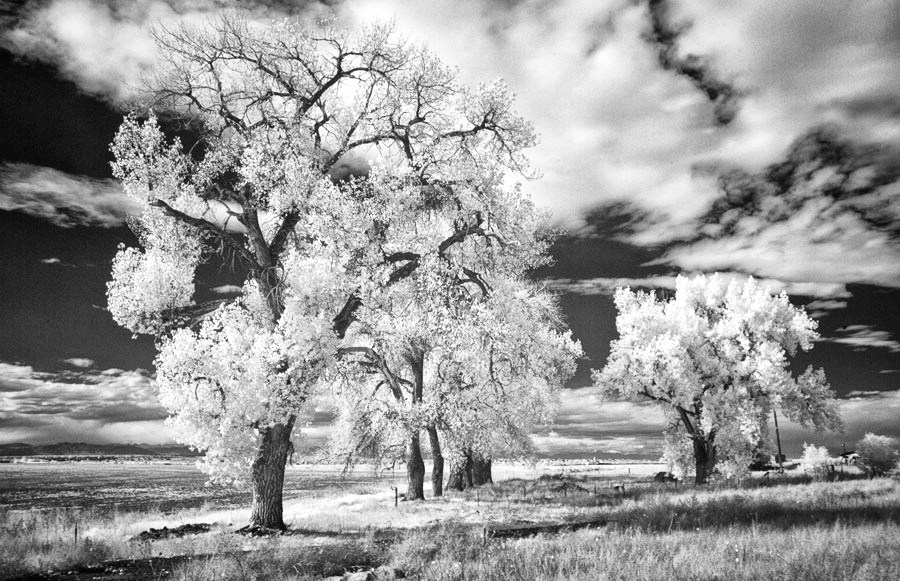 Getting Started with Infrared Photography