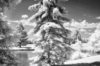 It Ain't Snow: Arvada, CO in Infrared