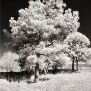 Understanding White Balance and IR Photography