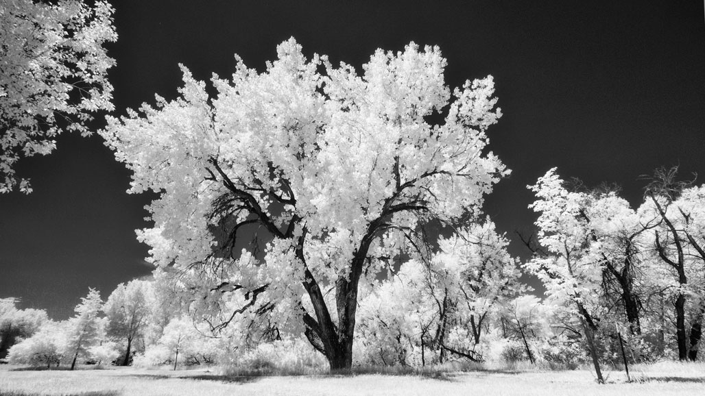 Shooting the DG Leica Zoom in Infrared