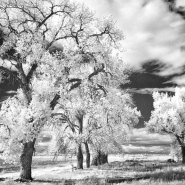 Some Thoughts on Infrared Capture & Image Resolution