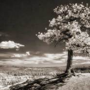 """Zion National Park: """"On the Rim in Infrared"""""""