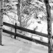 Shooting Infrared Images in the Winter