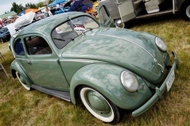 50.beetle