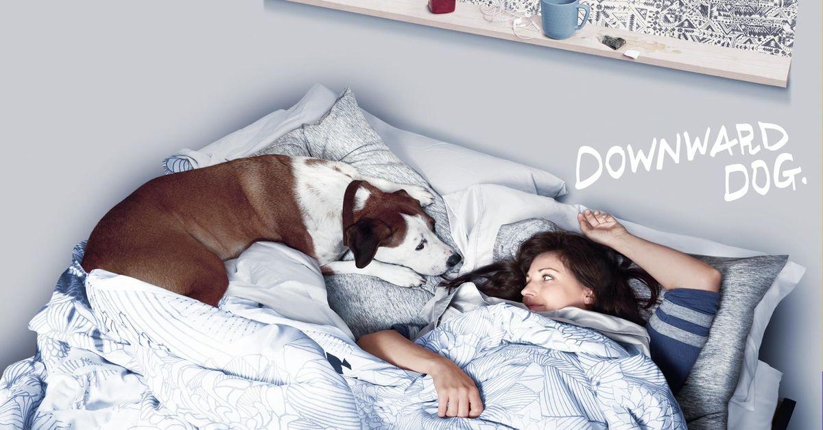 """Downward Dog"" promotional picture."