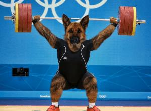Weightlifting Dog Del Mar Villas