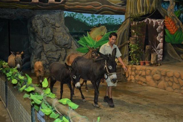 Zoobic Donkeys