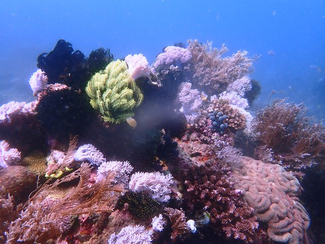 Philippines is the world's leading dive destination