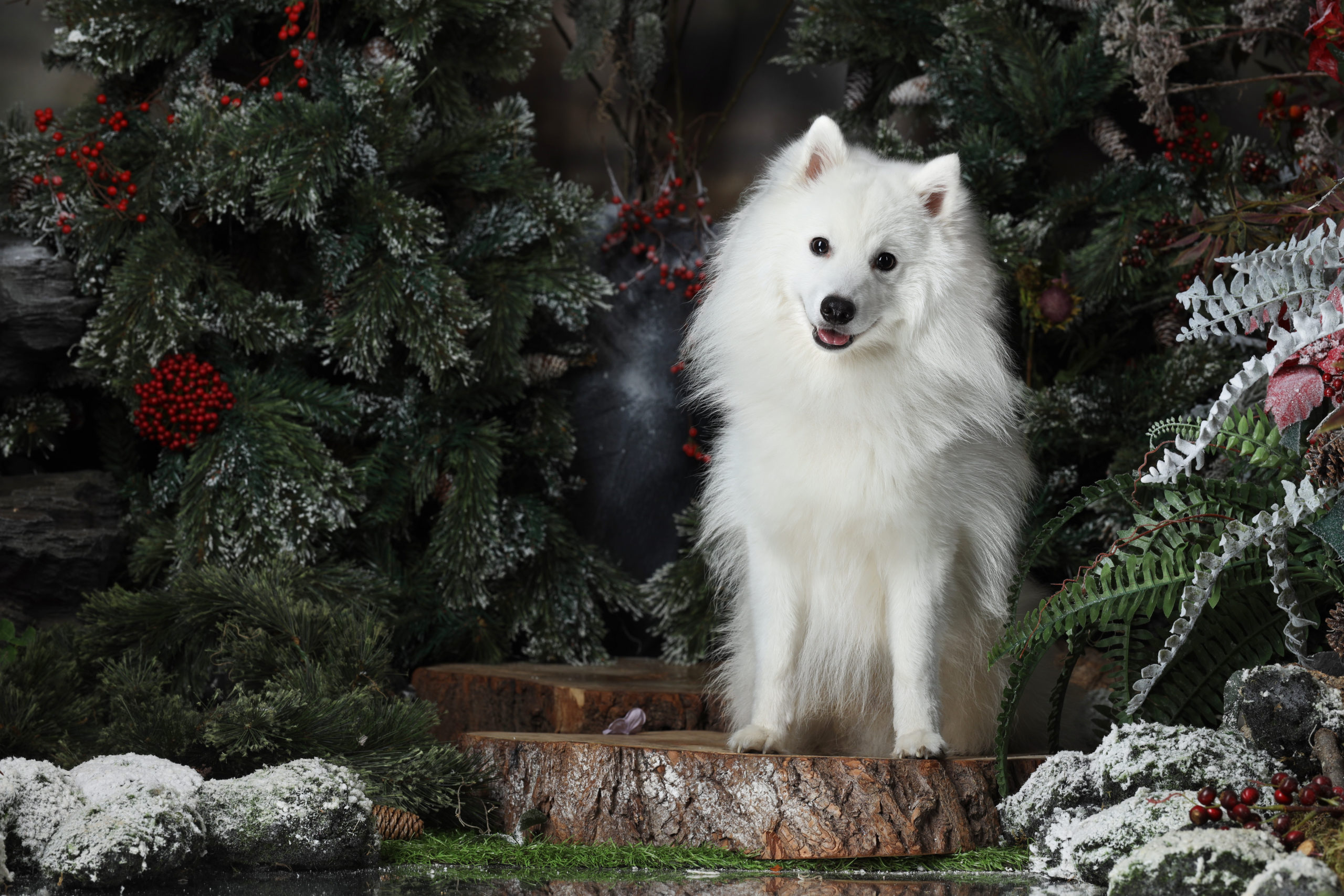 Dog in the enchanted forest