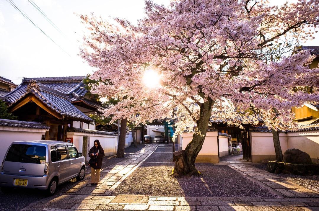 kyoto_sunlight