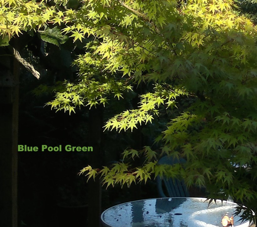 Blue Pool Green