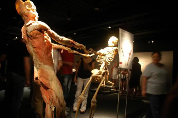Bodies Exhibit Guerrilla Ontology