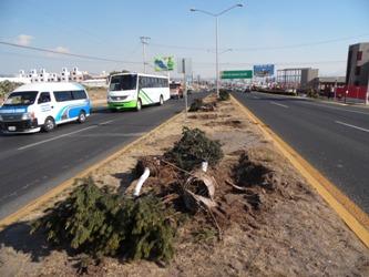 derriban árboles (10)