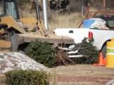derriban árboles (14)