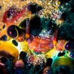 Spiny lobster @ Anacapa Island. -Sony RX100M2