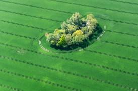 Bauminsel / Tree island