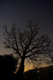 Baum - Il Pavone bei Nacht