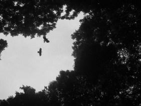 im Flug © Kruth 2015
