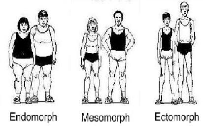 Are you an Ectomorph, Mesomorph, or Endomorph