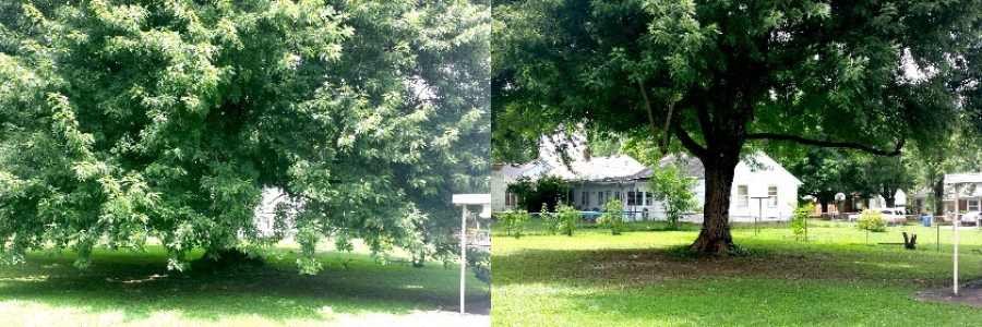 before and after 1547 s. kickapoo