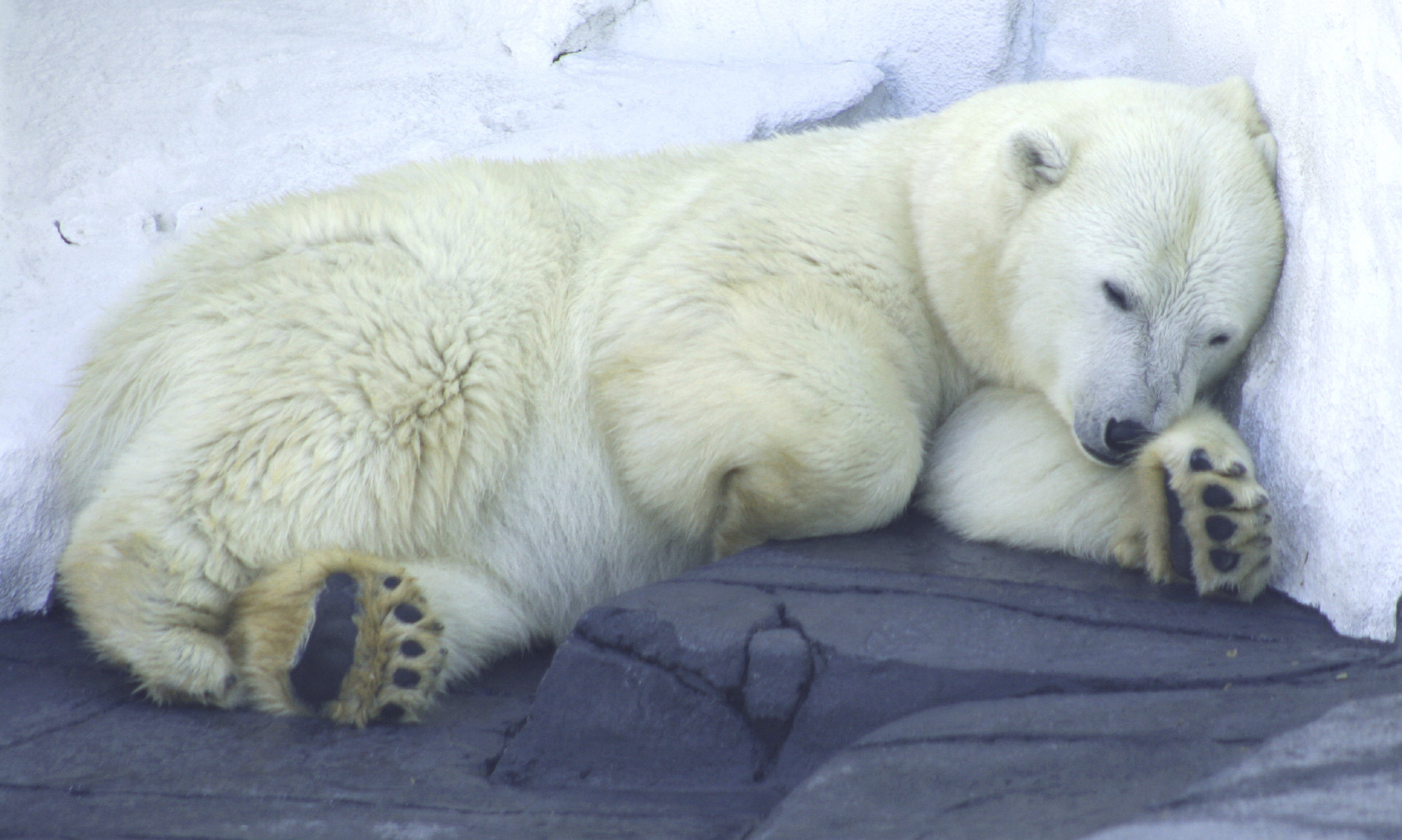 Planetbrowser Hibernation Animals Go Without Food Or