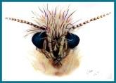 moth fin_web