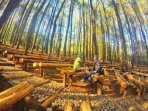 Best Photo Hunting in Hutan Pinus Imogiri