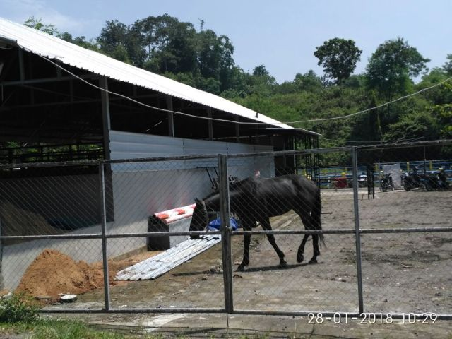 embung kuda