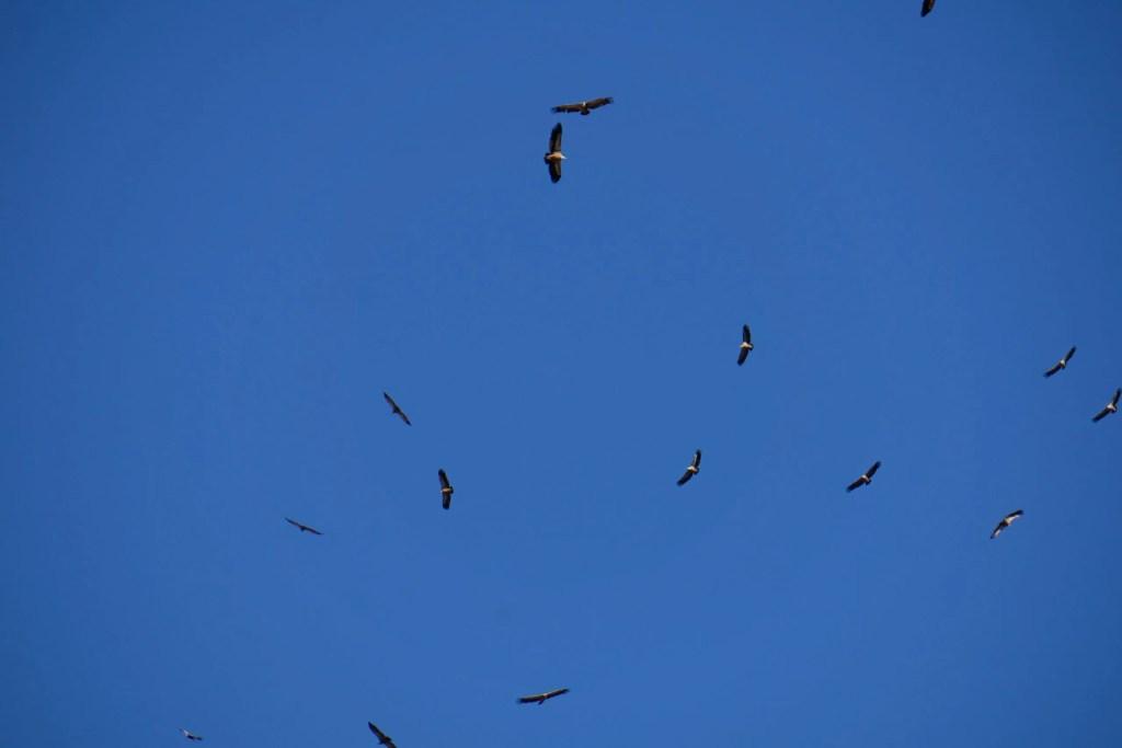 Les vautours sont de sortie