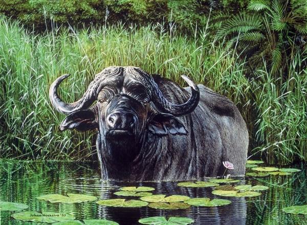 Johan Hoekstra Artist Wildlife Art