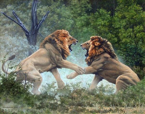 Oils Johan Hoekstra Wildlife Art Collection