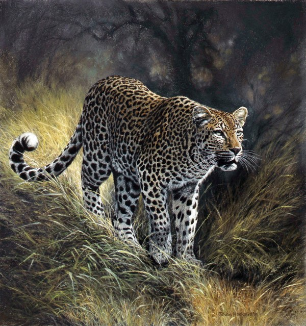 African Wildlife Art Prints