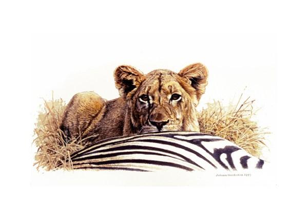 Lion Johan Hoekstra Wildlife Art Collection